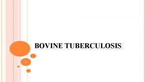 BOVINE TUBERCULOSIS 1 Synonyms Tuberculosis Pearly disease Definition
