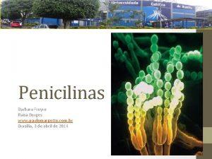 Penicilinas Barbara Freyre Rasa Borges www paulomargotto com
