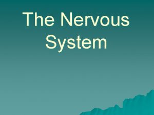 The Nervous System The nervous system u Functions