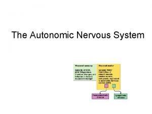 The Autonomic Nervous System The Autonomic Nervous System