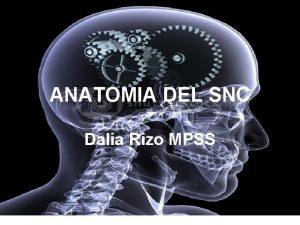 ANATOMIA DEL SNC Dalia Rizo MPSS SNC ENCEFALO