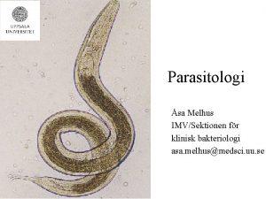 Parasitologi sa Melhus IMVSektionen fr klinisk bakteriologi asa