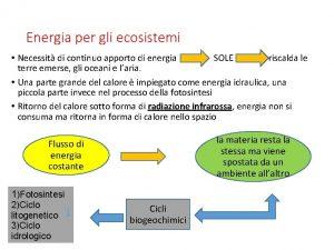 Energia per gli ecosistemi Necessit di continuo apporto