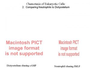 Chemotaxis of Eukaryotic Cells 2 Comparing Neutrophils to
