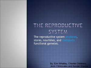 The reproductive system produces stores nourishes and transports