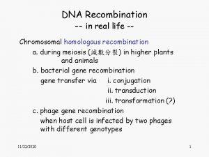 DNA Recombination in real life Chromosomal homologous recombination