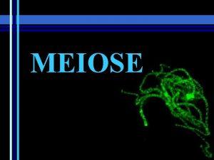 MEIOSE Meiose O que Meiose Processo de diviso
