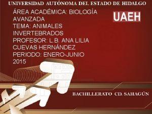 REA ACADMICA BIOLOGA AVANZADA TEMA ANIMALES INVERTEBRADOS PROFESOR
