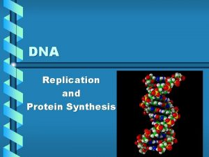 DNA Replication and Protein Synthesis DNA Deoxyribonucleic Acid