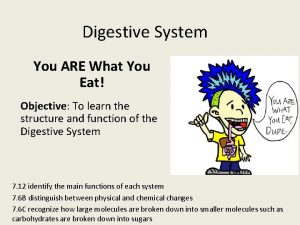 Digestive System You ARE What You Eat Objective