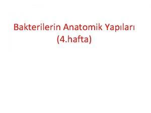 Bakterilerin Anatomik Yaplar 4 hafta Bakterilerin Anatomik Yaplar