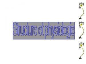 I Caractristiques du systme nerveux APlace du systme
