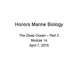 Honors Marine Biology The Deep Ocean Part 2