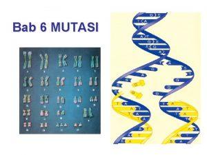 Bab 6 MUTASI MUTASI menghasilkan Perubahan materi genetik