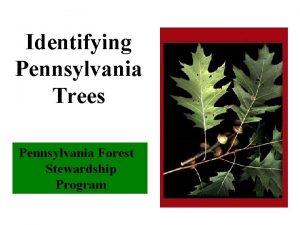 Identifying Pennsylvania Trees Pennsylvania Forest Stewardship Program Tree