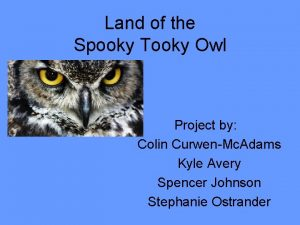 Land of the Spooky Tooky Owl Project by