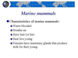 Marine mammals Characteristics of marine mammals Warmblooded Breathe
