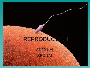 REPRODUCTION ASEXUAL REPRODUCTION ASEXUAL One parent is involved