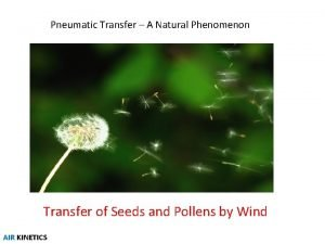 Pneumatic Transfer A Natural Phenomenon Transfer of Seeds