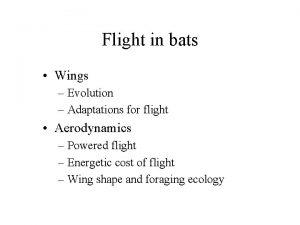 Flight in bats Wings Evolution Adaptations for flight