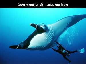 Swimming Locomotion Major types of locomotion in fishes