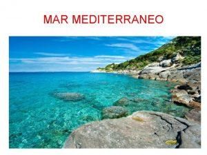 MAR MEDITERRANEO Mar Mediterraneo Viaggio immaginario granseola bolla