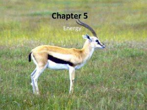 Chapter 5 Energy Energy and Work Energy the