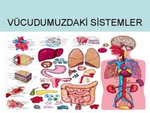 VCUDUMUZDAK SSTEMLER SNDRM SSTEM Sindirim sistemi vcudumuzdaki atklarn