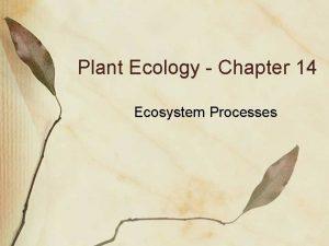 Plant Ecology Chapter 14 Ecosystem Processes Ecosystem Ecology