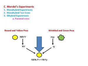 C Mendels Experiments 1 Monohybrid Experiments 2 Monohybrid