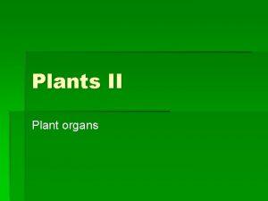 Plants II Plant organs Plant organs Root system