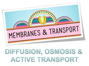 Homeostasis Why is homeostasis important for cells Living