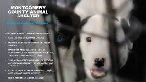 MONTGOMERY COUNTY ANIMAL SHELTER MOVING THE ANIMAL SHELTER