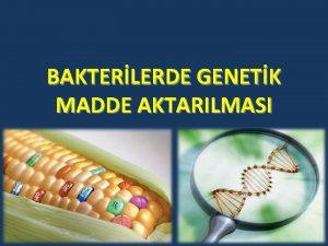 BAKTERLERDE GENETK MADDE AKTARILMASI Bakterilerde genetik maddenin bir