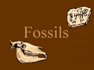 Fossils What are fossils The remains of once