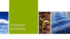 Processos biolgicos Processos Biolgicos Objetivos Remoo de matria