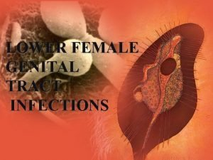 LOWER FEMALE GENITAL TRACT INFECTIONS Defence Mechanism Against