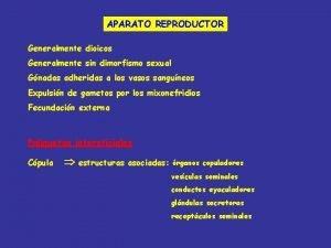 APARATO REPRODUCTOR Generalmente dioicos Generalmente sin dimorfismo sexual