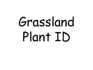 Grassland Plant ID Grasses Grasslike Barley Little Barnyard