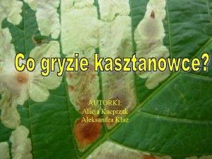 AUTORKI Alicja Kacprzak Aleksandra Kluz Dlaczego taki temat