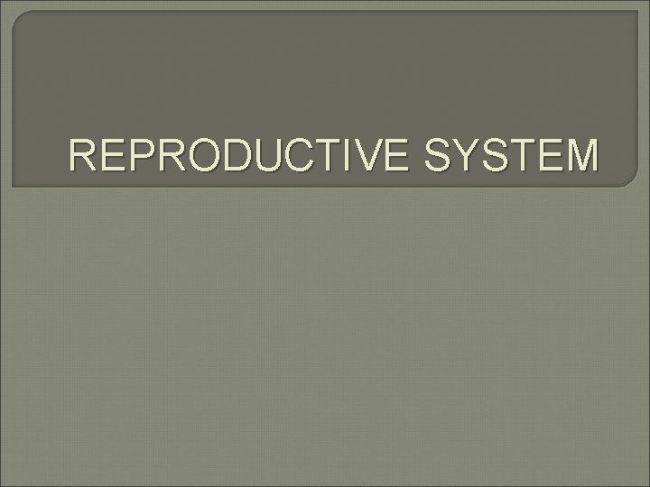 REPRODUCTIVE SYSTEM Female Reproductive Organs Female Reproductive System