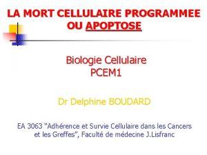 LA MORT CELLULAIRE PROGRAMMEE OU APOPTOSE Biologie Cellulaire
