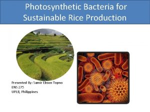 Photosynthetic Bacteria for Sustainable Rice Production Presented By