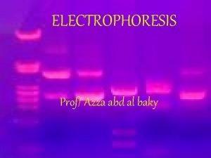 ELECTROPHORESIS Prof Azza abd al baky Electrophoresis Electrophoresis