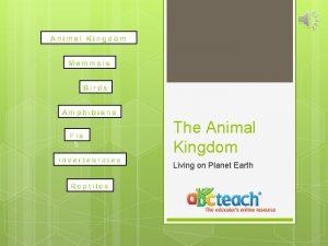 The Animal Kingdom Living on Planet Earth Animal
