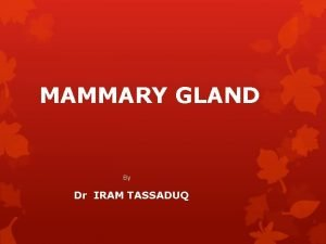 MAMMARY GLAND By Dr IRAM TASSADUQ INTRODUCTION Mammary