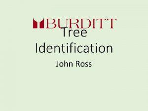 Tree Identification John Ross Tree Identification ISA Certified