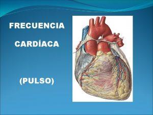 FRECUENCIA CARDACA PULSO Qu es la frecuencia cardiaca
