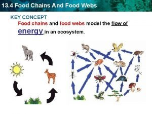 13 4 Food Chains And Food Webs KEY