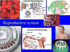 Reproductive system Reproductive system Gametic meiosis All Animal